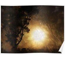 Sunrise through the Trees Poster