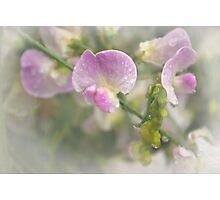 Refreshing beauty Photographic Print