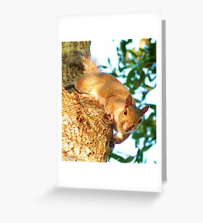 Tree Squirrel, Panasonic Lumix Greeting Card