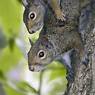 Sibling squirrels by Mundy Hackett