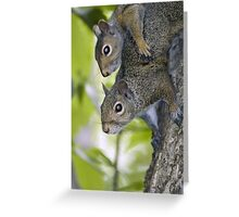 Sibling squirrels Greeting Card