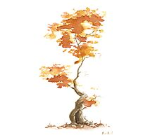 Little Zen Tree 393 Photographic Print