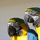 Parrot pair by Anna Phillips