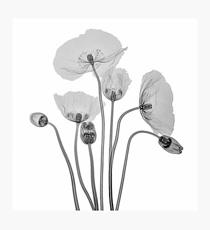 Bunch of Poppies Photographic Print