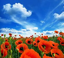 Poppies by inspiredesign