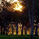 A Golden Grove by Enivea