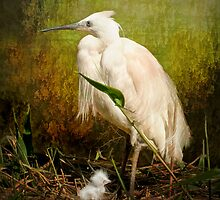 Little Egret and Chick by Tarrby
