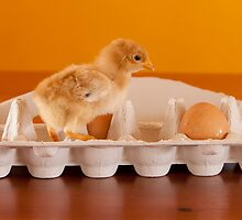 Chicken or the Egg? by Jodie Williams