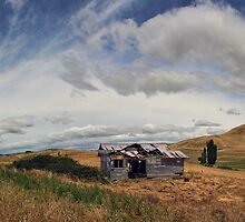 Left High And Dry by Peter Kurdulija
