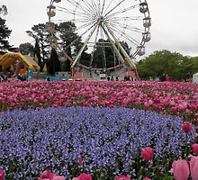 Bluebells and Tulips, Floriade, Canberra, A.C.T. Australia. by kaysharp