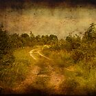 Road to the Beach by tutulele