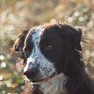 Bubbled dog by Karen Havenaar