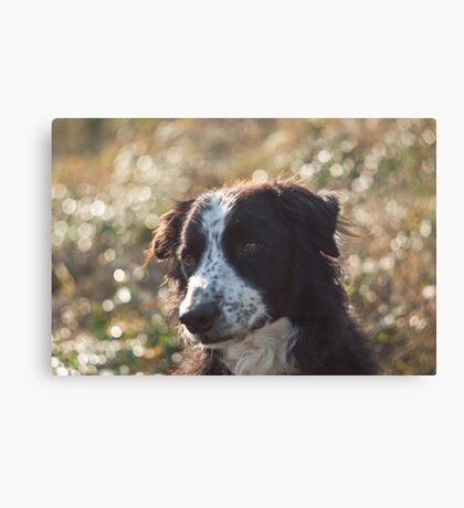 Bubbled dog Canvas Print