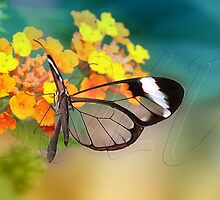 Glasswing by Lyn Evans