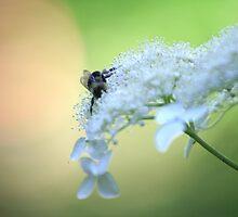 BeeUtiful by dawnderby
