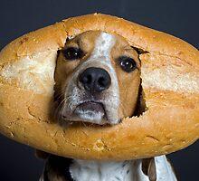 Inbread Dog by Darren Boucher
