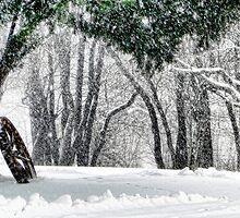 Snow by Carolyn  Fletcher