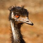 Young Emu by Steve Bass