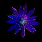 Lilac Fractal Leakage by Atılım GÜLŞEN