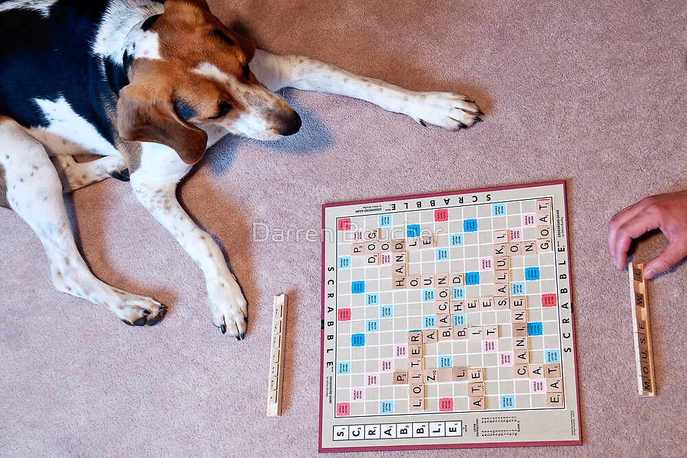 Dogs love to play games by Darren Boucher