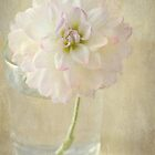 pure and simple by Teresa Pople