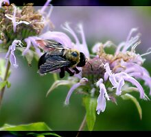 Bee dances in Love by dawnderby