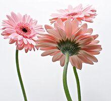 Flowers by John Wiersma
