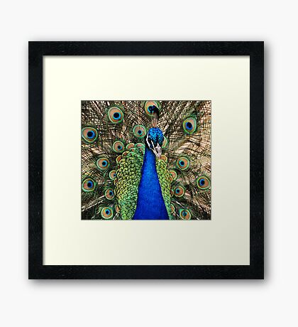 Closeup and Personal Framed Print