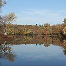 Eels Creek Fall 2011 by Tracy Wazny