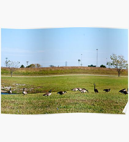 City Geese Poster