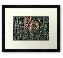 The Fence Framed Print