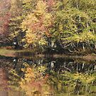 Eels Creek Conservation Area, Apsley Ontario Canada by Tracy Wazny