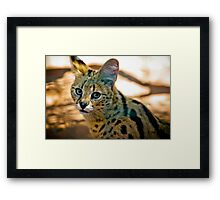 Who is watching who. Framed Print