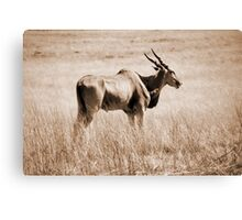 Spirit of South Africa Canvas Print