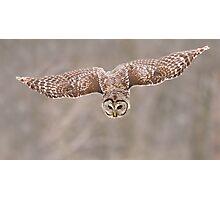 Barred-Owl (Strix-varia) Photographic Print
