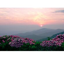 Rhododendron Sunrise Photographic Print
