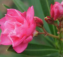 A Garden Beauty by Kathy Bucari
