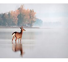 Young Buck - Ottawa River, Dunrobin Ontario Photographic Print