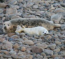 Grey seal & pup by Fiona MacNab