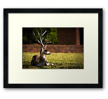 Relax in the shade  Framed Print