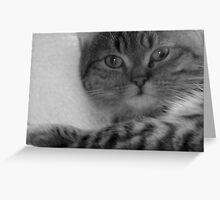Dreamy cat Greeting Card