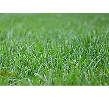 Green Grass Photographic Print