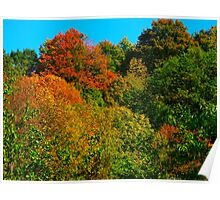 Under a blue canopy lies the zeal of Fall Poster