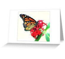 Happiness Is A Butterfly  Greeting Card