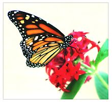 Happiness Is A Butterfly  Photographic Print