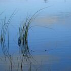 Reflections in Water by ienemien