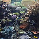 Aquarium- Fishing for Color by T. Thornton
