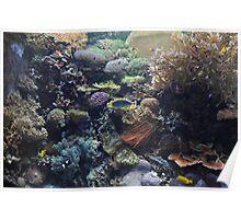 Aquarium- Fishing for Color Poster