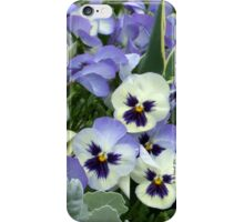 The Perfect Pansy iPhone Case/Skin