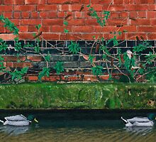 Canal Ducks by daverives